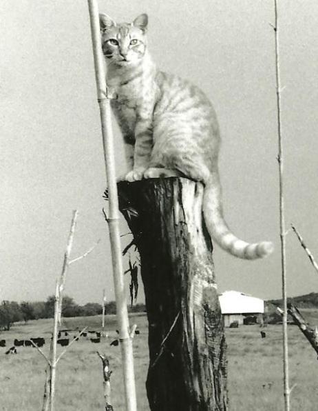 Simba, photo corrected, 1999